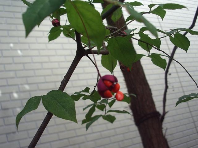 錦木塚伝説 その壱
