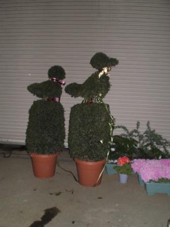 盆栽の親分サイズ